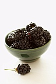 Small bowl of blackberries, one blackberry in front