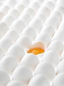 Viele weiße Eier, eines geöffnet
