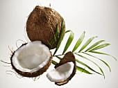 Opened coconut, palm leaf and whole coconut