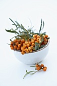 Sea buckthorn twigs with berries and leaves in small bowl
