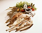 Fish and ingredients for fish dishes