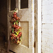 Red onions hanging on old door
