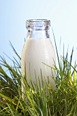 A bottle of milk in grass
