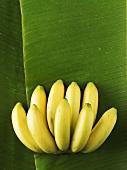 Bananas on banana leaf