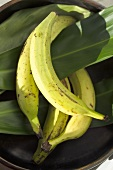 Vier Kochbananen und Bananenblätter