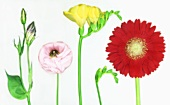 Various flowers with white background