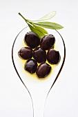 Black olives in olive oil with olive sprig