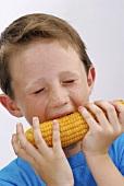 Boy biting into a cob of corn