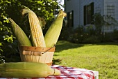 Corn cobs in wooden bucket in garden
