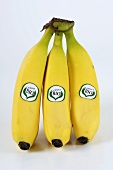 Three organic bananas