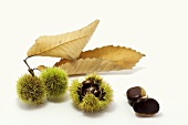 Sweet chestnuts in their shells with leaf