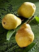 Three yellow Williams pears