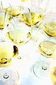 Several glasses of white wine