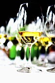 Several glasses of white wine on a table