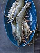 Fresh king prawns in blue dish
