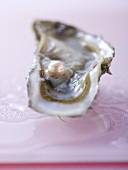 Fresh oyster with pink pearl