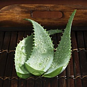 Aloe vera leaves (cut off the plant) with drops of water