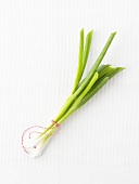 Spring onions tied together with kitchen string