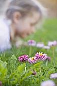 Daisies in grass, child in background