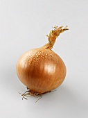 An onion with drops of water