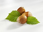 Three hazelnuts with leaves
