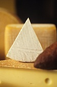 Mixed cheese still life