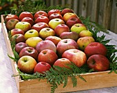 Apples in a fruit box