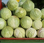 White cabbages, in a pile