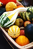 Assorted squashes and apples in a basket