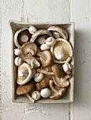 Assorted mushrooms in a rectangular dish