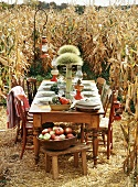Laid table in a field of maize