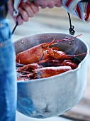 Man carrying a pot of cooked lobsters