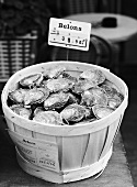 Belon oysters in a basket (b-w photo)