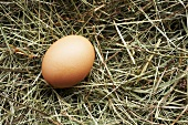 Brown hen's egg on straw