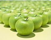 Many green apples, variety 'Granny Smith'