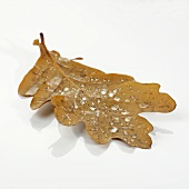 An oak leaf with dewdrops