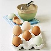Eier (braun, weiss & hellblau-grün) in Eierbehälter