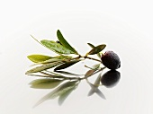 Olive sprig with black olive