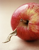 A red apple with dried leaf
