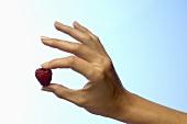 Frauenhand hält eine Himbeere