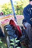 Mann auf einem Traktor bei der Apfelernte