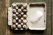 Quails' eggs in an egg box with a feather