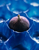 A Fig in Blue Plastic Holder