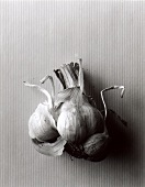 Garlic bulb (black and white photo)