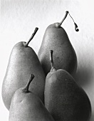 Four Gute Luise pears (black and white photo)