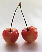 Two White Cherries on the Stem