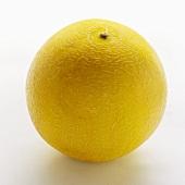 A Whole Gallia Melon