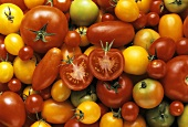 Tomato still life (filling the picture)