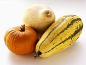 A Blue Hubbard Squash, a Delicata Squash and a Pumpkin