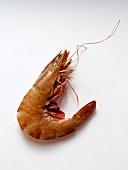 A Single Whole Shrimp